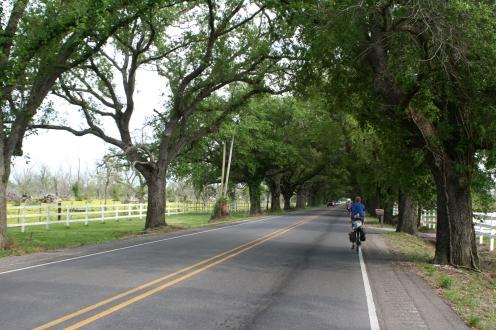 Tree-lined