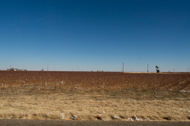 A cotton field in Northern Tejas